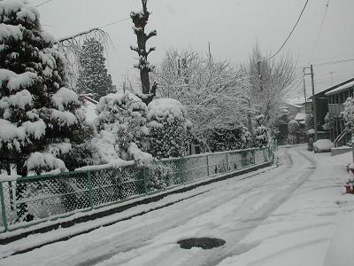 20060121yuki2